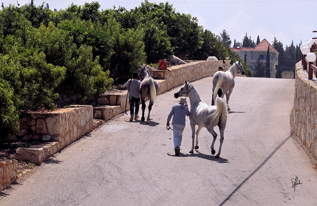 Group of mares